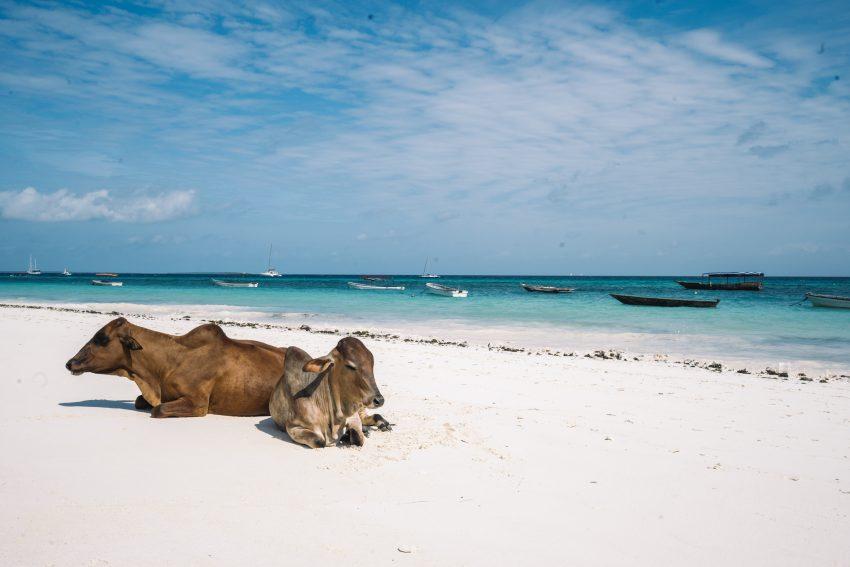 Zanzibar île paradisiaque