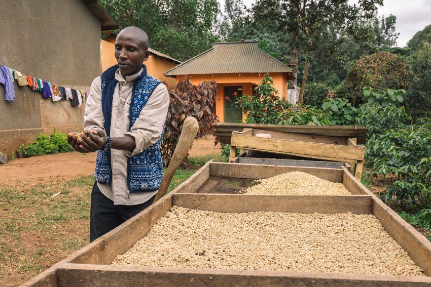 producteur café Tanzanie