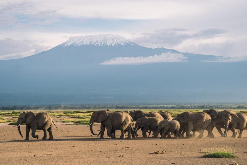 Kenya Amboseli éléphants