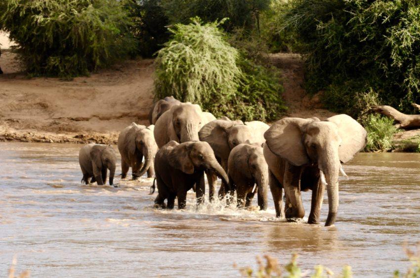 éléphants kenya