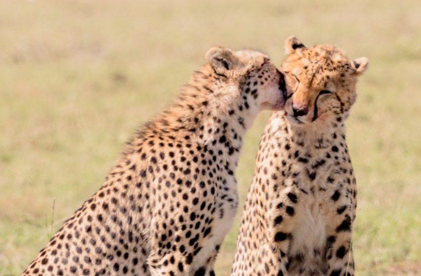 kenya ou tanzanie quel safari choisir