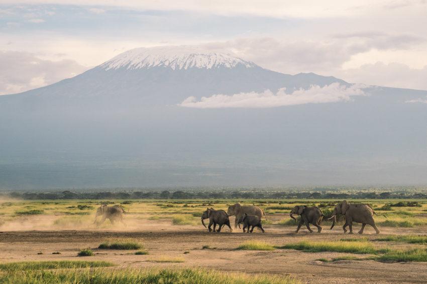 kilimandjaro Kenya elephant